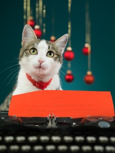 cat making wishes for christmas